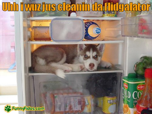 dog in the refrigerator