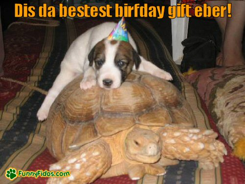 Puppy riding a tortoise