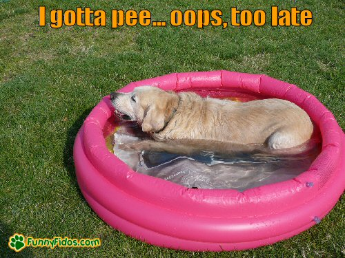 dog laying in a baby pool