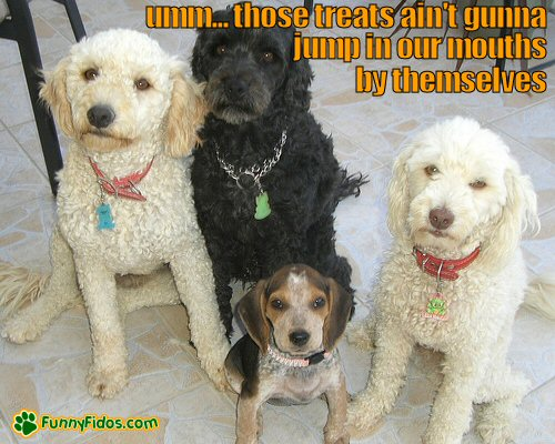 dogs looking deperate for treats