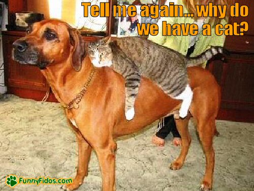 cat riding on dogs back