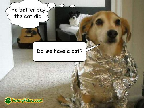 Dog wrapped in aluminum foil