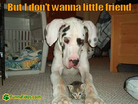 Great dane with a little kitty