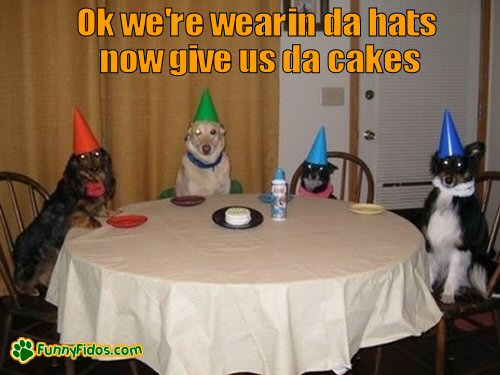dogs sitting at table wearing birthday hats