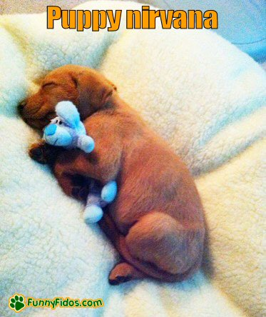 cute puppy sleeping with cuddle toy