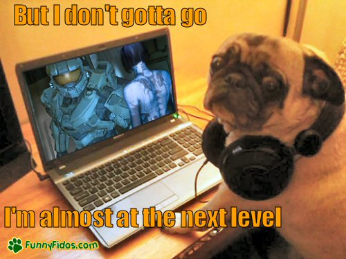 Funny pug playing computer game