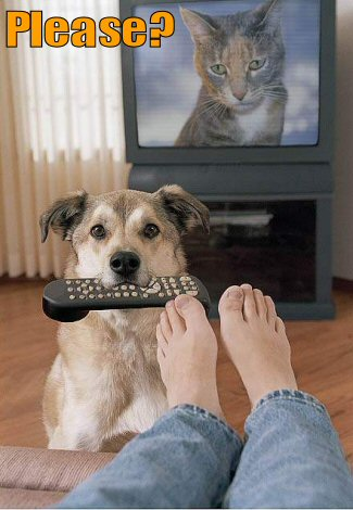 Dog holding remote wanting owner to change channel
