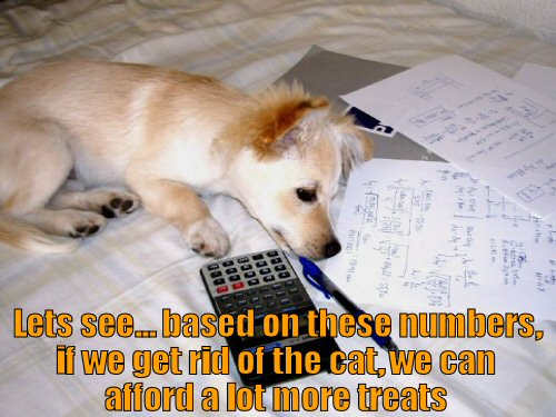 cute dog with calculator