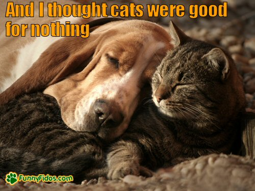 dog using cat as a pillow