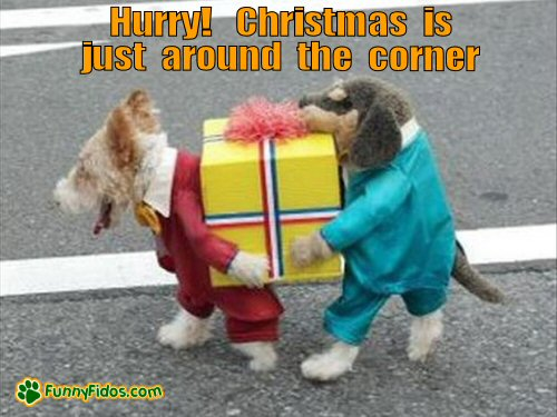 funny dog picture christmas right around corner christmas is just around the corner