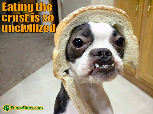 dog with bread on  his head