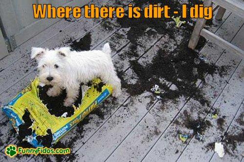 Little dog digging a bag of dirt