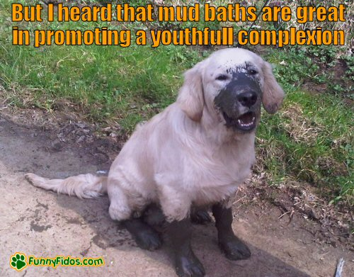 dog covered in mud