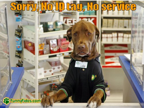Dog working counter at store