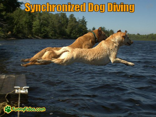 Two dogs diving into the water