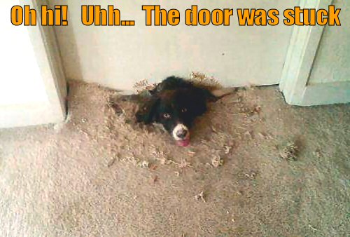 Dog digging under a door