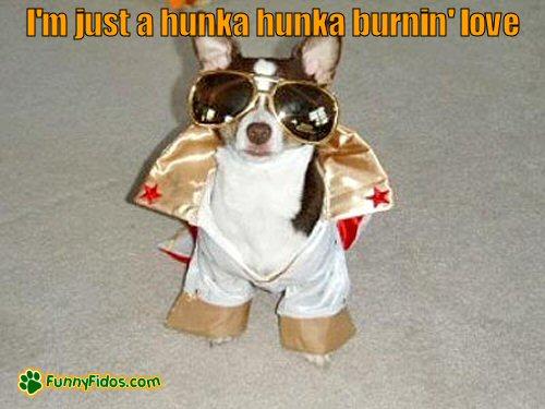Funny dog dressed like Elvis