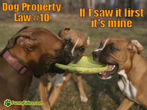 dogs fighting over a frisbee