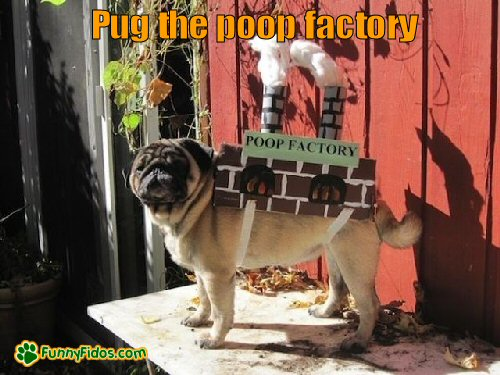 Pug wearing a poop factory costume