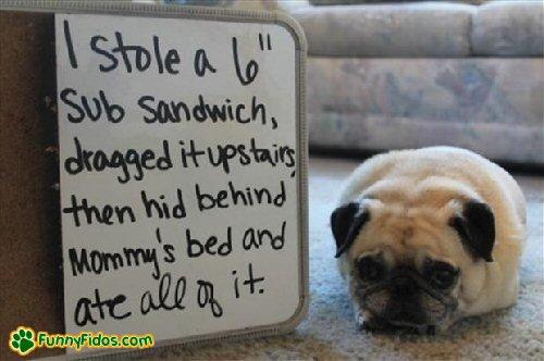 sub sandwich dog shame