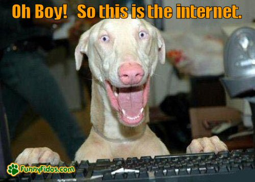 Dog excited about being on the internet