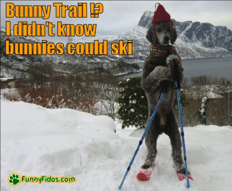 dog skiing