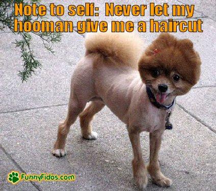 Dog with a bad haircut