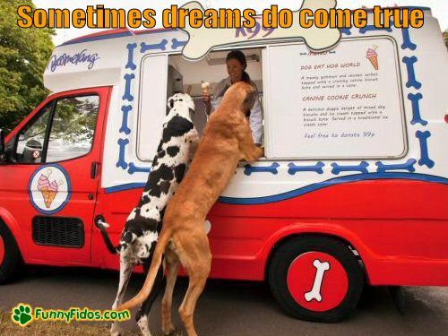 Big dogs at ice cream truck