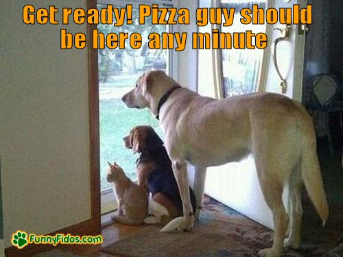 dog waiting at door for pizza man