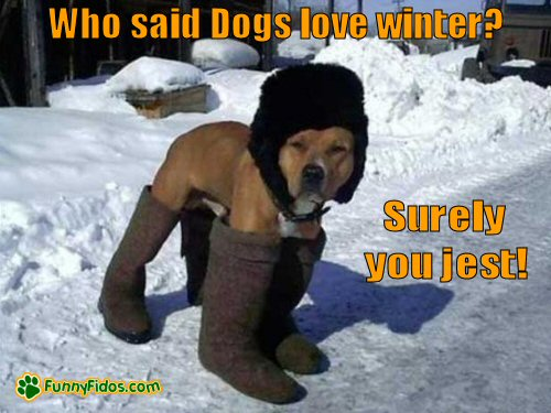 Dog wearing human winter clothes