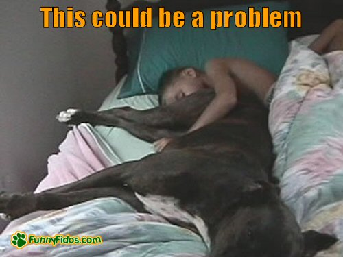 funny-dog-picture-this-could-be-a-problem