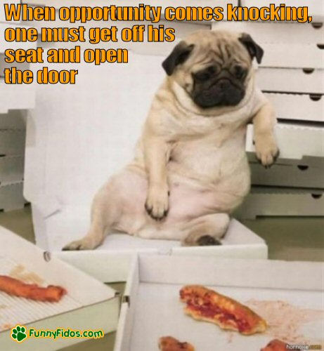 Funny pug eating a lot of pizza