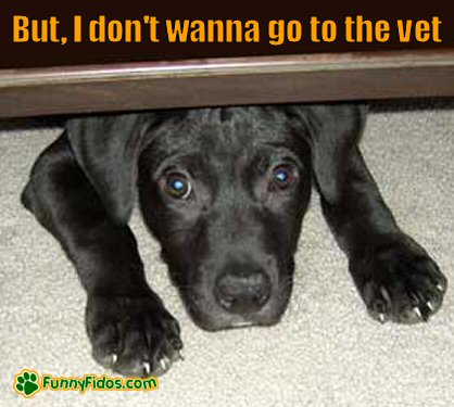 cutepuppy not wanting to go to the vet
