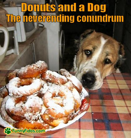 dog looking sad at a plate of donuts