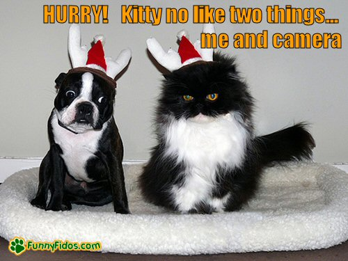 dog and cat posing for christmas photo