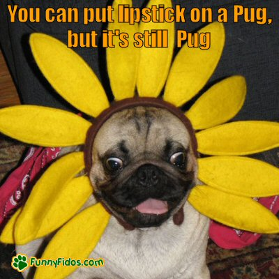 Pug dressed as a flower
