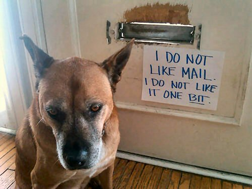 funny-dog-shame-i-dont-like-mail
