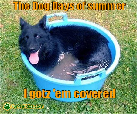 Dog lying in a large water bucket