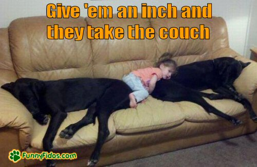 Two bigs dogs hogging the couch