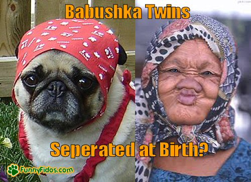 Dog with Babushka