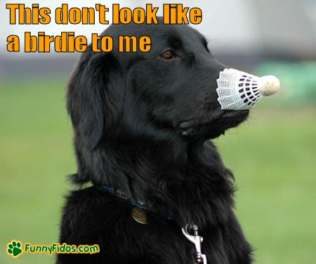 Dog with badminton birdie on nose