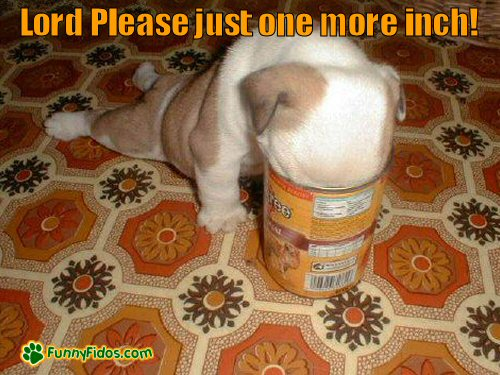 Puppy with head in can wishing for one more inch