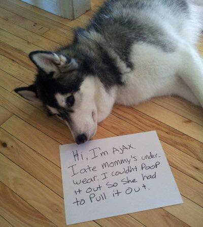 Funny Dog Shame