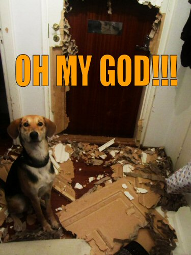 Dog standing in front of a door he destroyed
