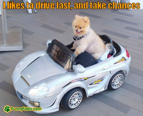 cute dog driving toy car