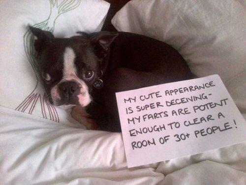 dog shame stinky farts