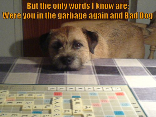 dog playing scrabble