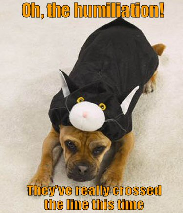 dog dressed in a cat costume