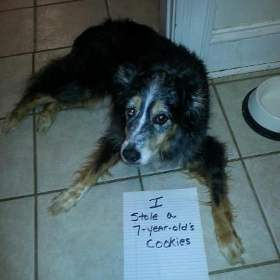 dog stole a 7 year olds cookies