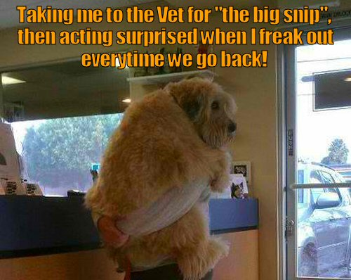 dog scarfed at the vet